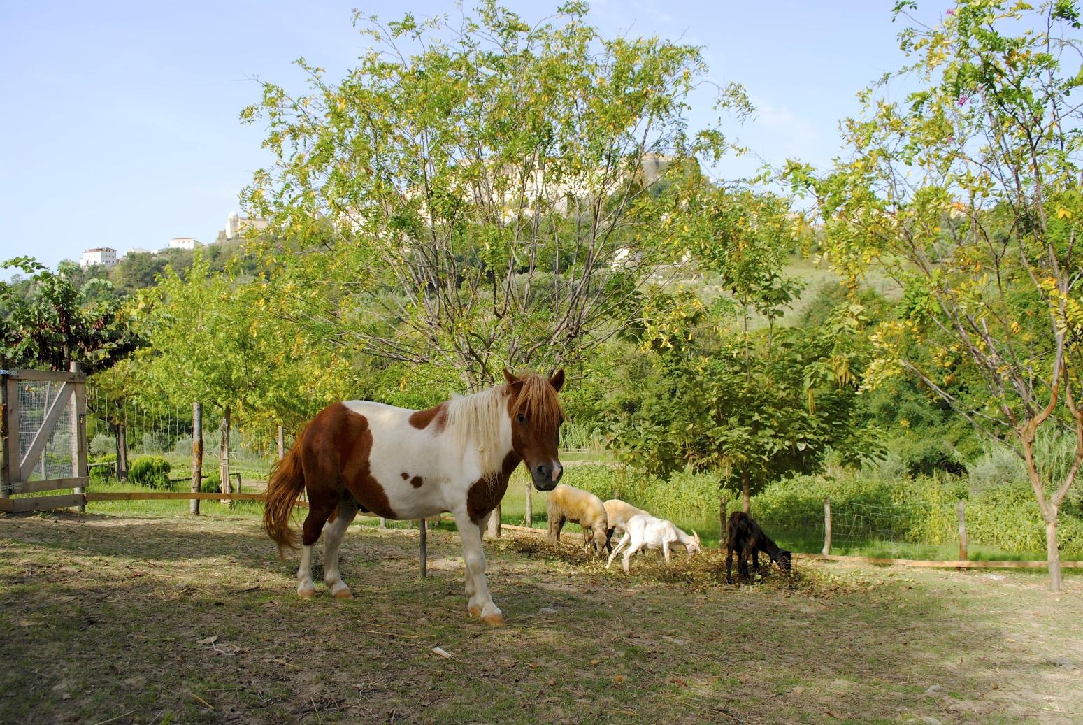 Il Pony